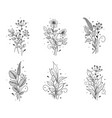 hand drawn floral set with flowers and leaves vector image