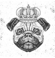 retro hipster animal pug-dog in crown vector image