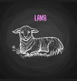 animal lamb in chalk style on blackboard vector image