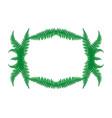 frame fern leaves vector image