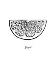hand drawn of grapefruit fruit on white background vector image