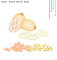 Lotus Roots with Vitamin C B6 and B1 vector image vector image