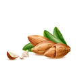 realistic almond nuts on shell with leaves vector image vector image