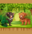 bears in the jungle vector image