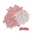 hand-drawn ink dahlias isolated floral elements vector image vector image