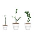 Three Creeper Plant in Ceramic Flower Pots vector image vector image