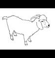 Angora goat vector image vector image