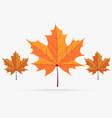 autumn orange maple leaf fall isolated on white vector image vector image