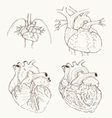 heart anatomy hand draw vector image