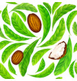 shea nuts with leaves in pattern vector image vector image