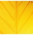 Yellow Leaf Texture vector image