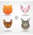 Cat Breeds icons vector image vector image