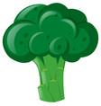 fresh broccoli on white background vector image
