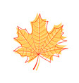 maple leaf isolated outline of a maple leaf on a vector image vector image