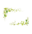 vine nature frame vector image