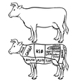 Cow cuts diagram and butchery set vector image