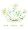 absinthe herbs ingredients vector image vector image