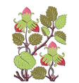 Colorful botanical hand drawn strawberry bush vector image vector image