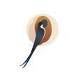martlet sitting near nest barn swallow wild bird vector image