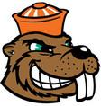 beaver head sports logo mascot vector image vector image