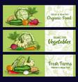 farm vegetables sketch banners veggies vector image vector image