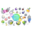fruits hand drawn icons set fresh organic food vector image vector image