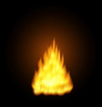 Realistic fire flames vector image vector image