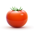 red fresh tomato vector image vector image