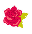 red rose with green leaf blossom in cartoon style vector image vector image