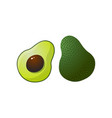 whole and half fresh fruit avocado isolated on vector image