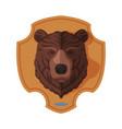 bear head on wall hunter trophy flat vector image