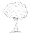 cartoon drawing of tree vector image vector image