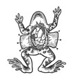dissected frog sketch engraving vector image