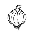 figure fresh onion natural vegetable nutrition vector image vector image