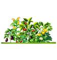 Fresh vegetable plants growing in the garden vector image vector image