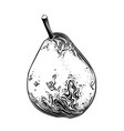 hand drawn sketch pear in black color isolated vector image vector image