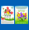 spring flowers bouquets greeting posters vector image vector image