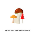mushrooms on the white background vector image