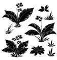 Flowers and grass set silhouettes vector image vector image