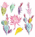 collection beautiful cactus flowers vector image