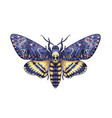colored acherontia styx butterfly isolated on vector image