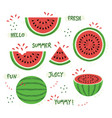 green and red whole and sliced watermelon set vector image