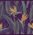 palm leaves and strelitzia reginae flower known as vector image