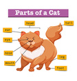 Diagram showing parts of cat vector image
