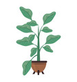 plants growing in pot nature decoration vector image vector image