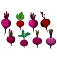 Purple beets vegetables with stalks and leaves vector image