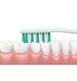 teeth and gums brushing dental hygiene routine vector image