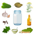 empty jar and fresh ingredients for pickles vector image