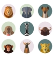 African animal round flat icons vector image vector image