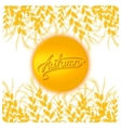 Autumn sun card vector image vector image